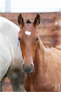 Photo cheval a vendre QUADRADO DE LA GESSE